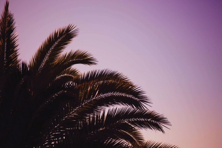 palm wallpaper 146